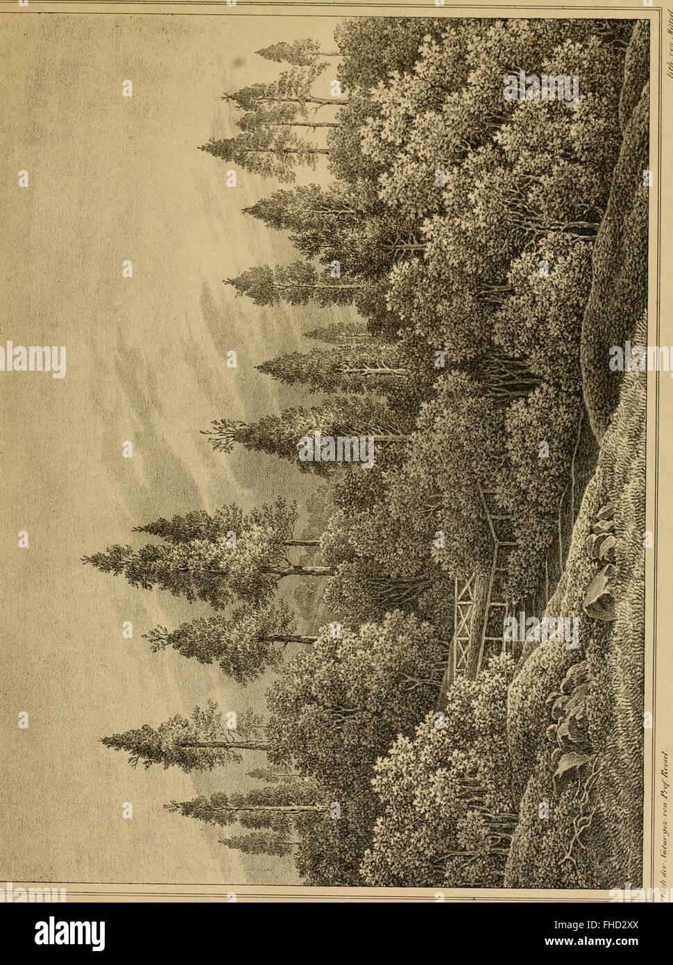 Die forst-insecten - oder Abbildung und beschreibung der in den wC3A4ldern Preussens und der nachbarstaaten als Stock Photo