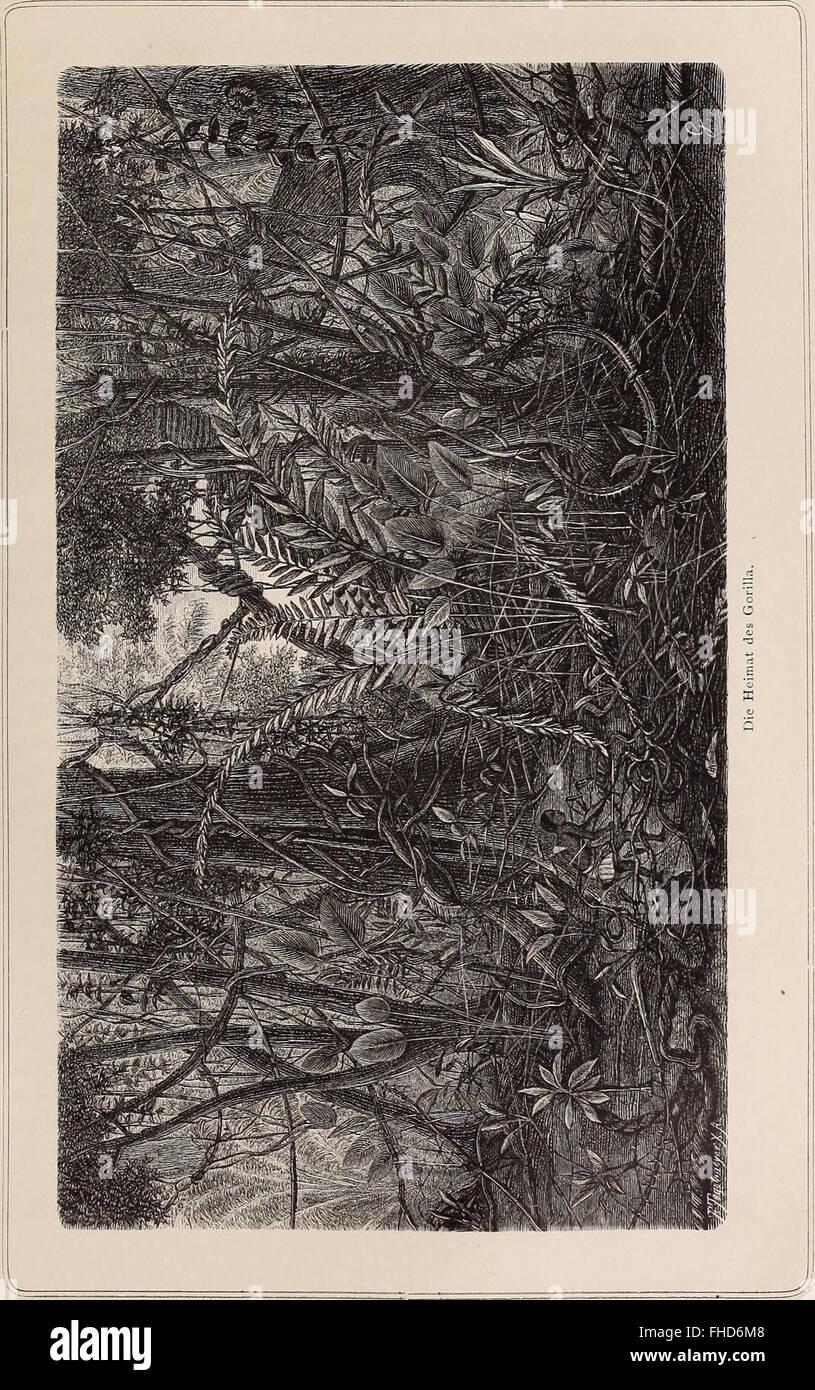 Die Loango-Expedition ausgesandt von der Deutschen Gesellschaft zur Erforschung Aequatorial-Africas, 1873-1876. Ein Reisewerk in drei Abtheilungen (1888) Stock Photo