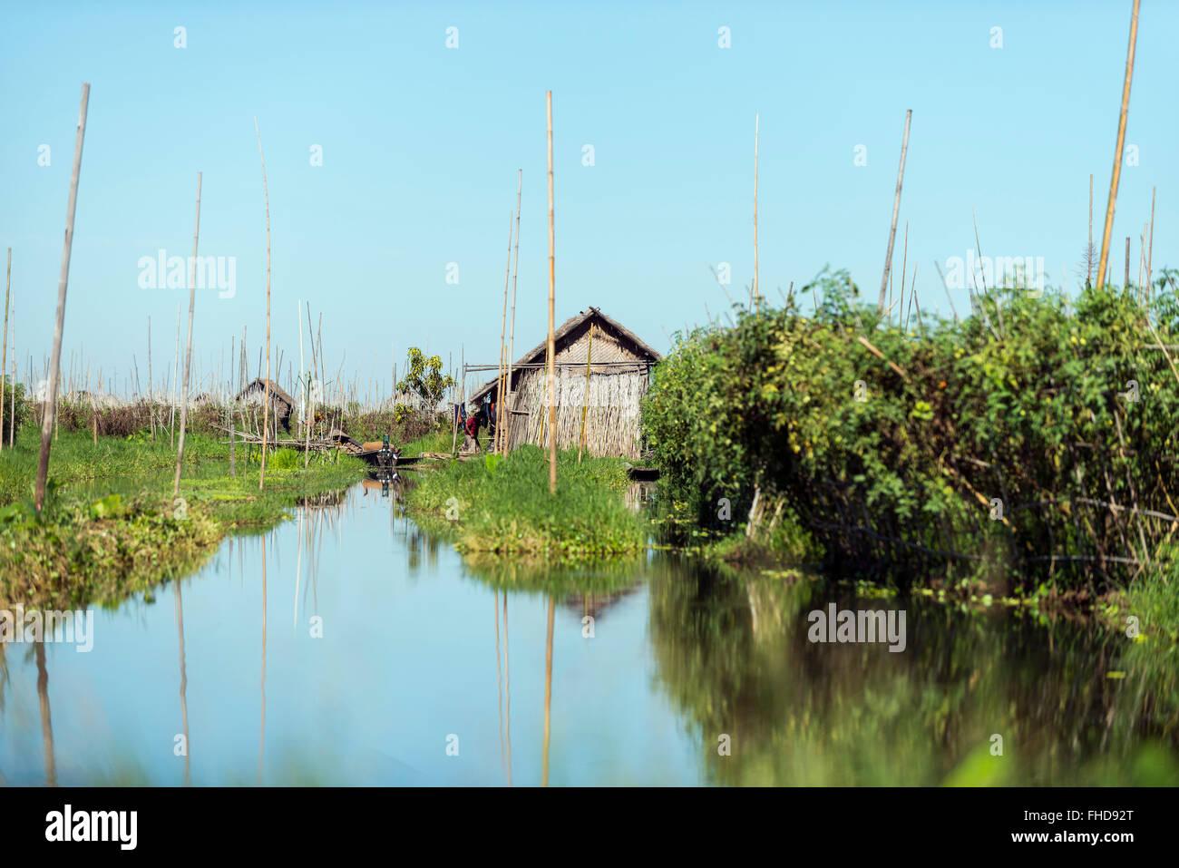 Floating gardens. Inle lake, Burma - Stock Image