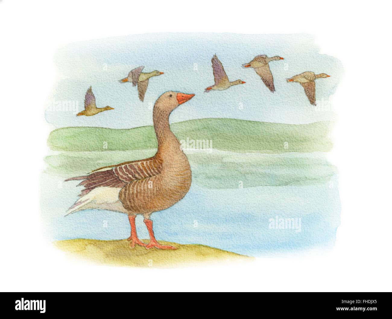 Watercolor illustration - Stock Image