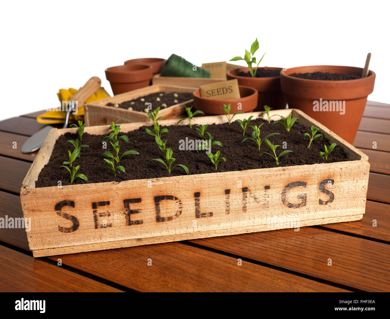 Seedling tray on a garden table top - Stock Image