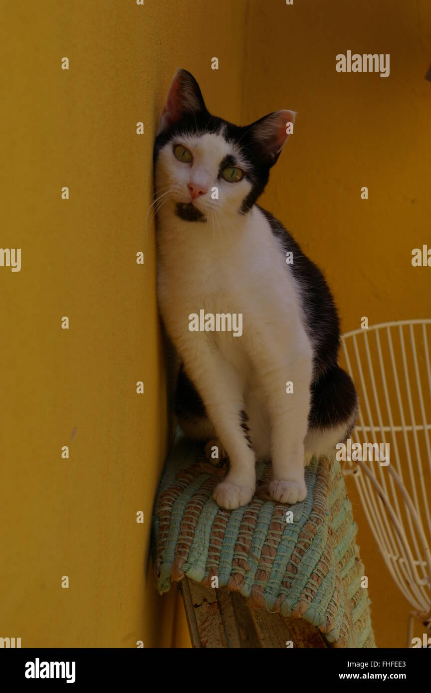 Black and white cat sitting on a ladder against a yellow wall Stock Photo