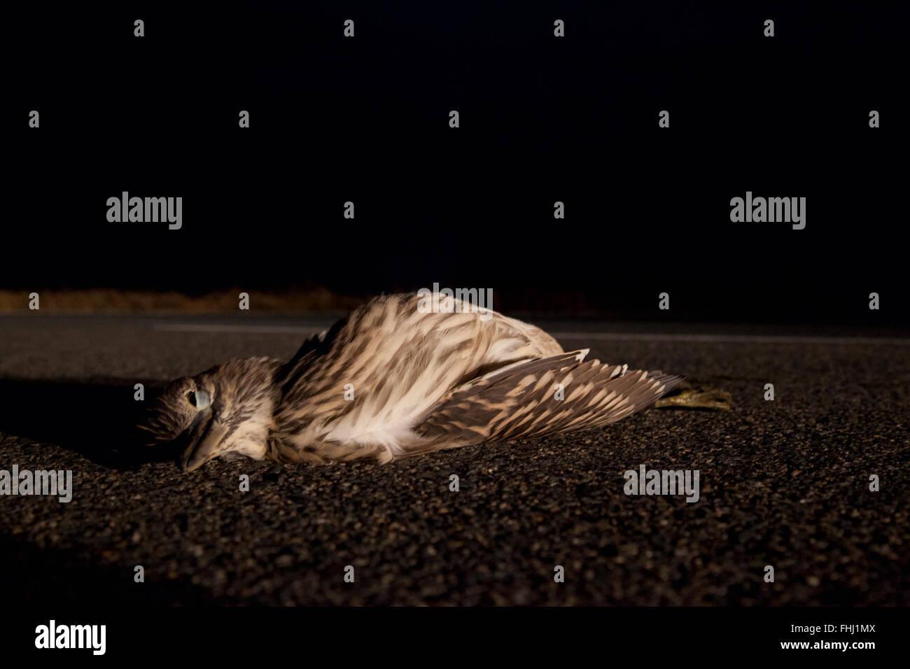 The Fukushima samurais -  Japan / Fukushima  -  'Before the birds and foxes would come to eat any animals ran - Stock Image