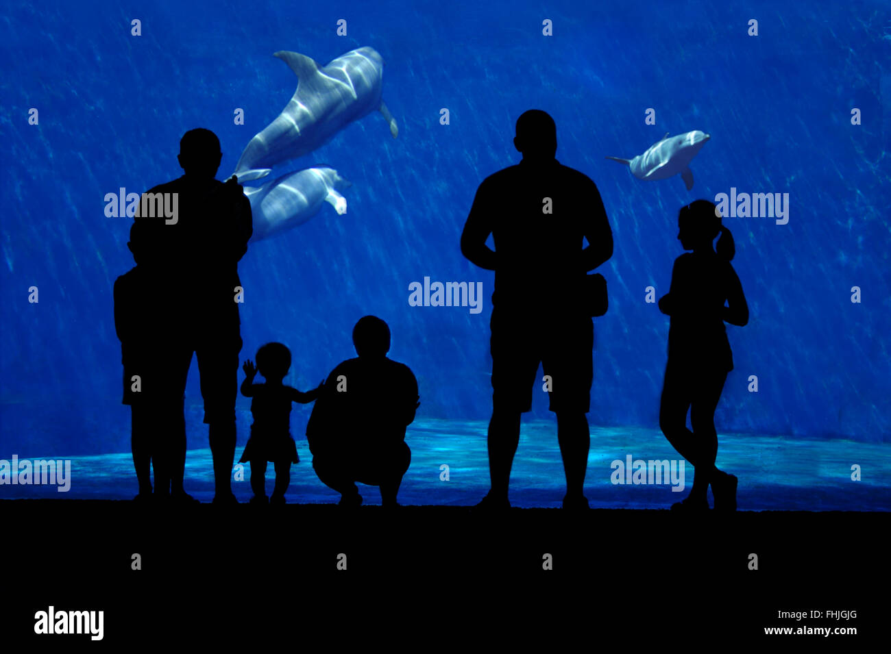Silhouette of a family watching dolphin. Foreground subject completely in the shade, a family of dolphins in the - Stock Image