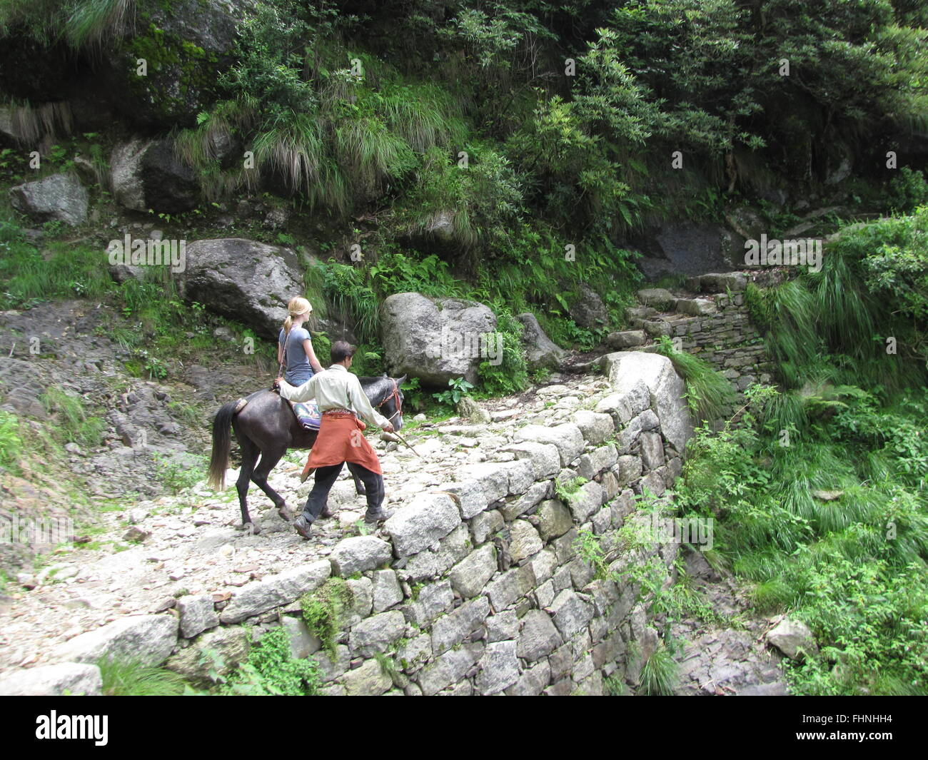 Indian guide takes tourist on horse trek to Triund in Upper Pradesh of India or foothills of Himalaya or Himachal - Stock Image