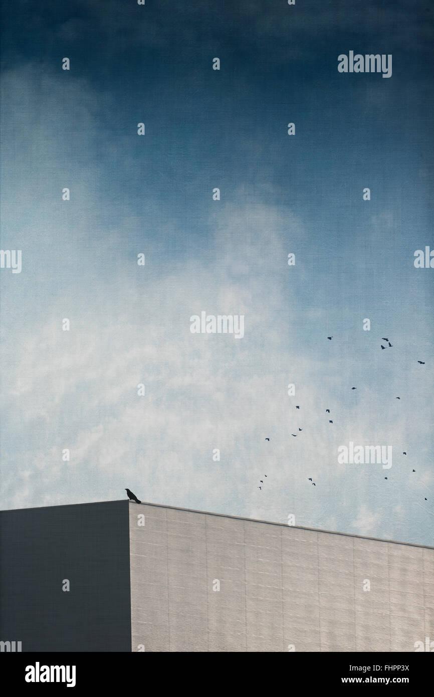 Bird on roof of an hall, digitally manipulated - Stock Image