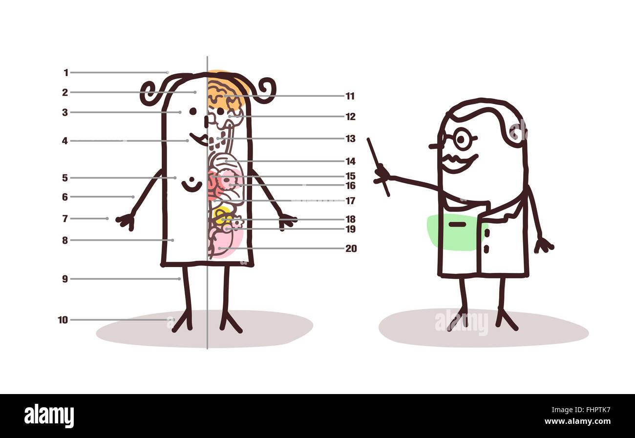 vector cartoon female anatomy lesson Stock Photo: 97003291 - Alamy