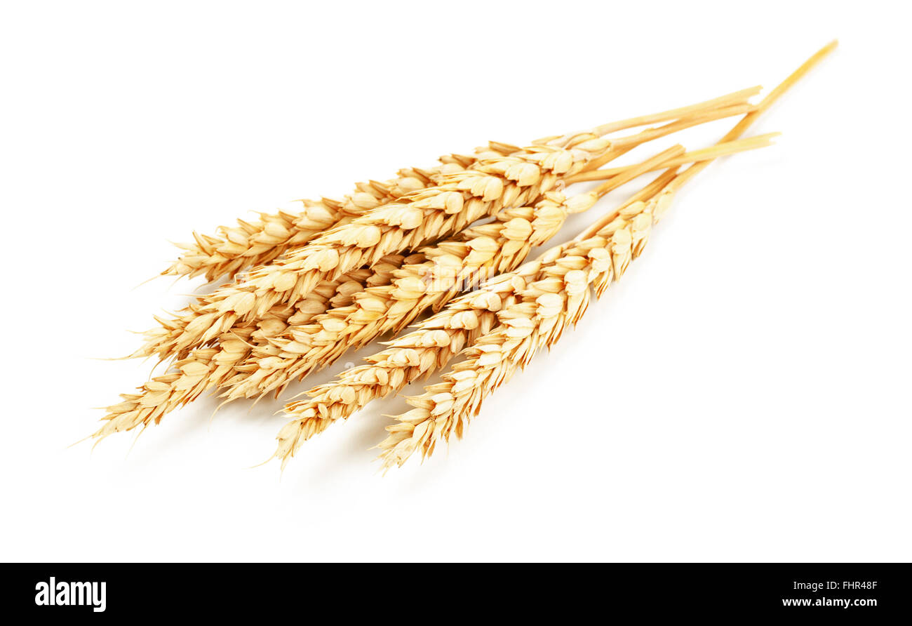 Wheat isolated on white background - Stock Image