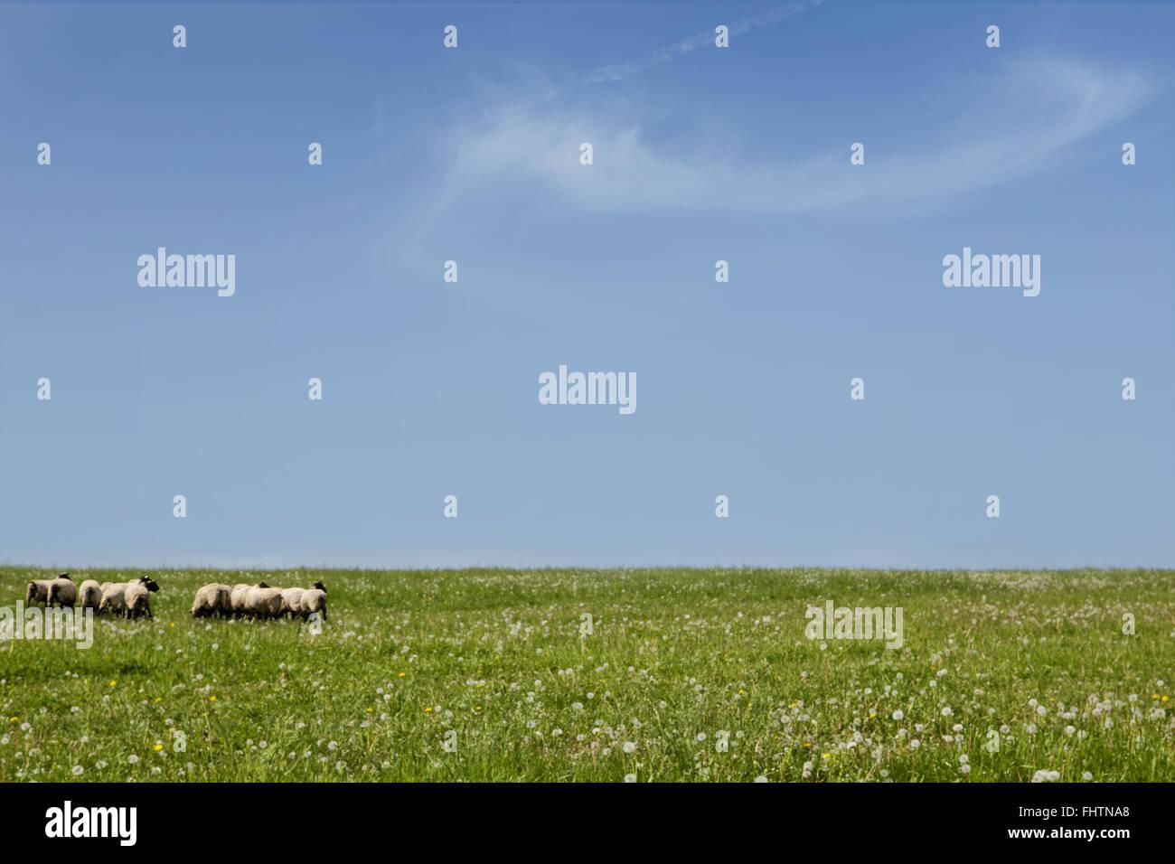 Traditional farming. - Stock Image
