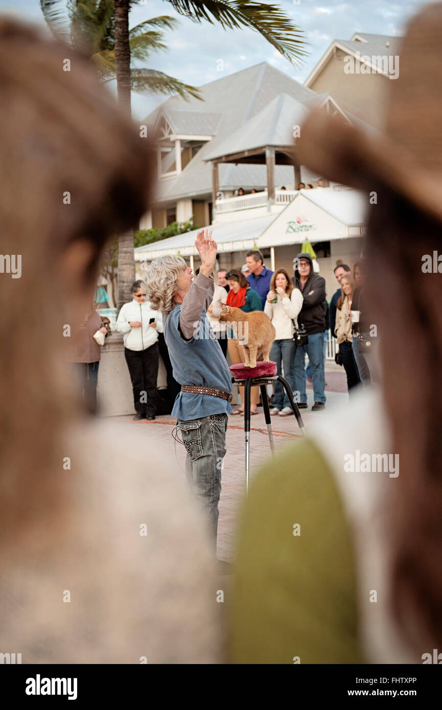 Cat Man / Mallory Square - Stock Image