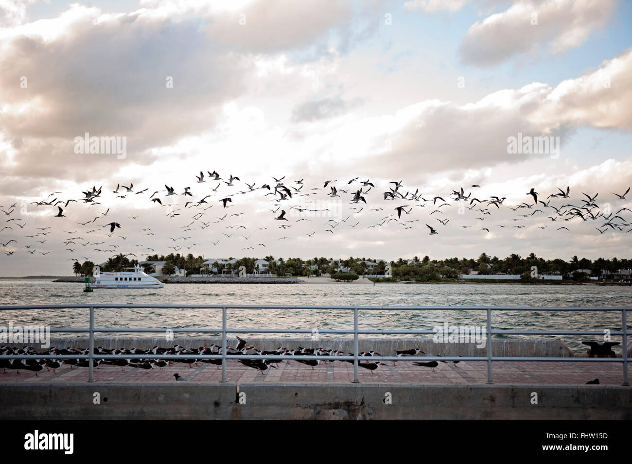 View from Mallory Square - Seagulls - Stock Image