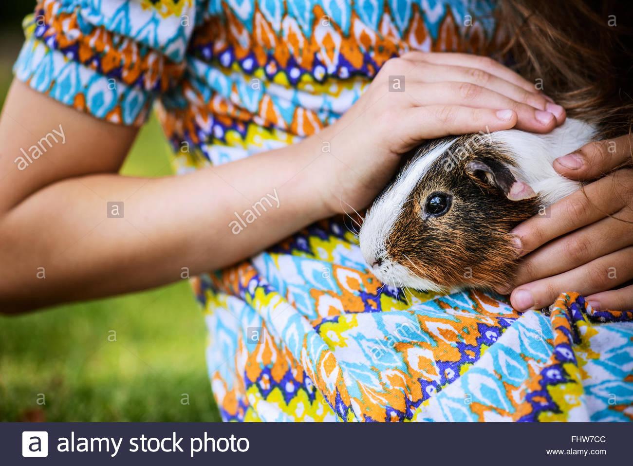 Little girl petting guinea pig - Stock Image