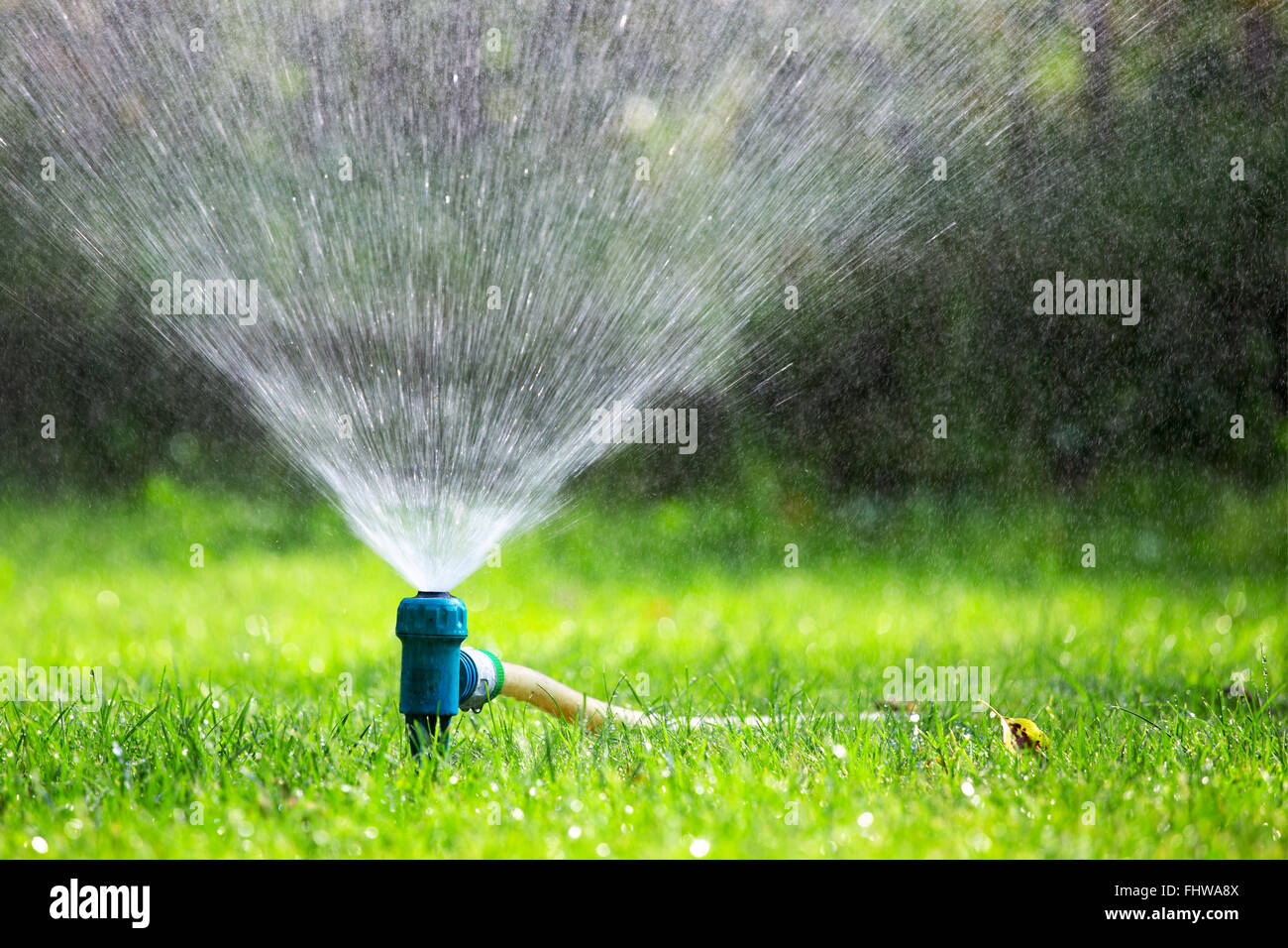 Lawn sprinkler spraying water over grass in garden on a hot summer day - Stock Image
