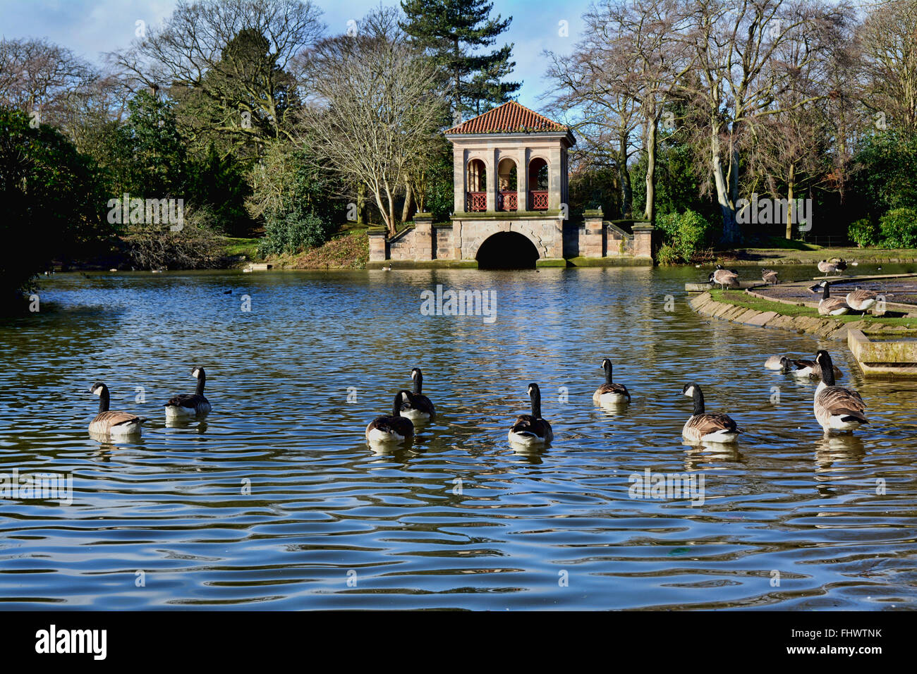 Geese enjoying a little winter sunshine by swimming towards the famous Boat House on one of the lakes in Birkenhead - Stock Image