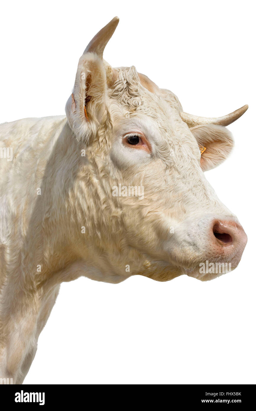 Cow Cut Out Stock Photos Amp Cow Cut Out Stock Images Alamy