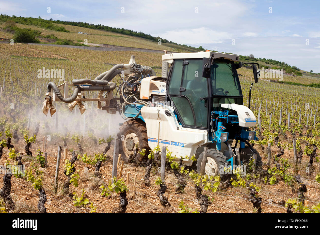 Wine growing in Burgundy ('Bourgogne') - Stock Image