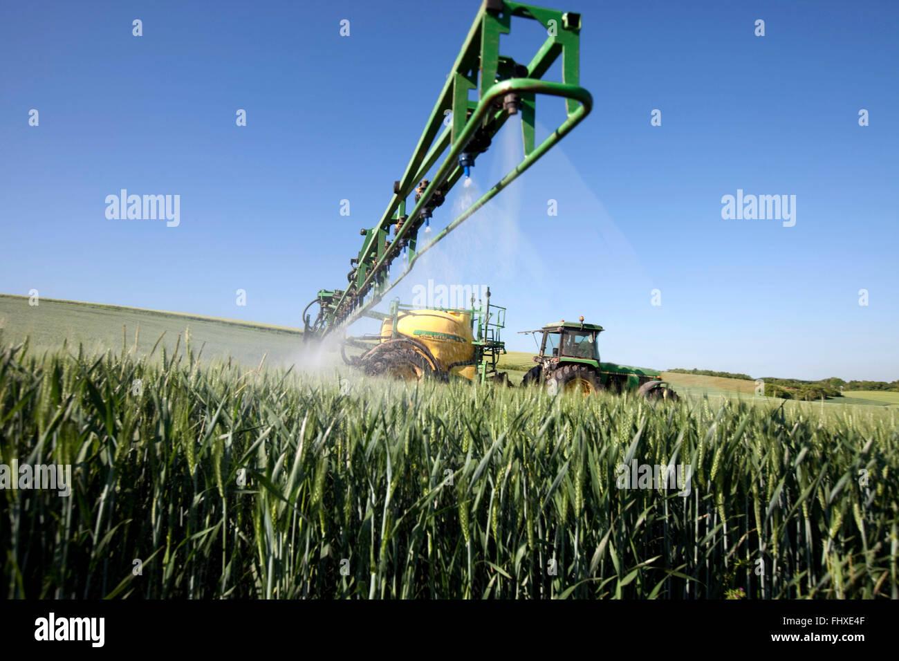 Fungicidal treatment in a corn field - Stock Image