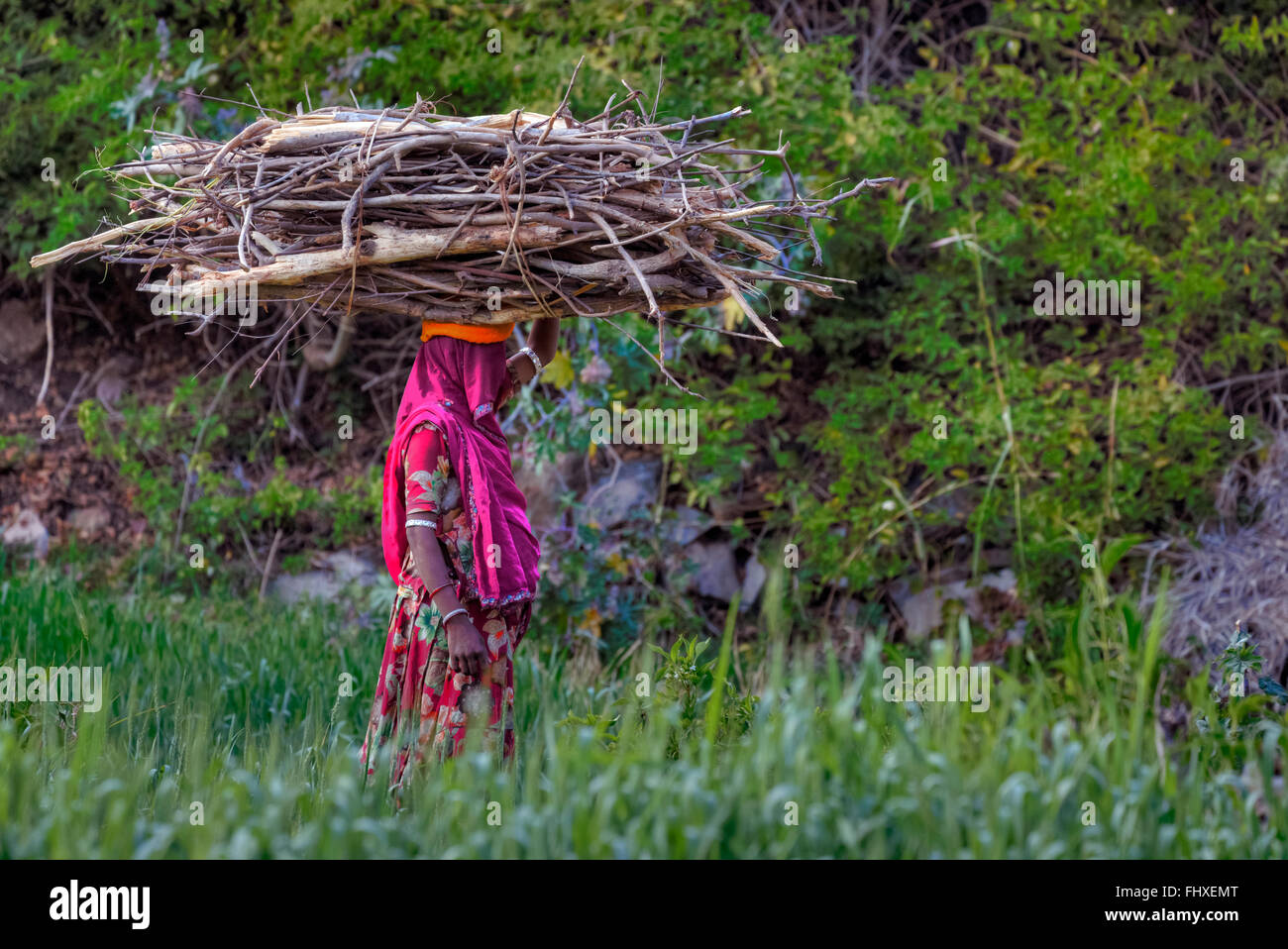 woman carrying firewood on her head in rural Rajasthan, India - Stock Image