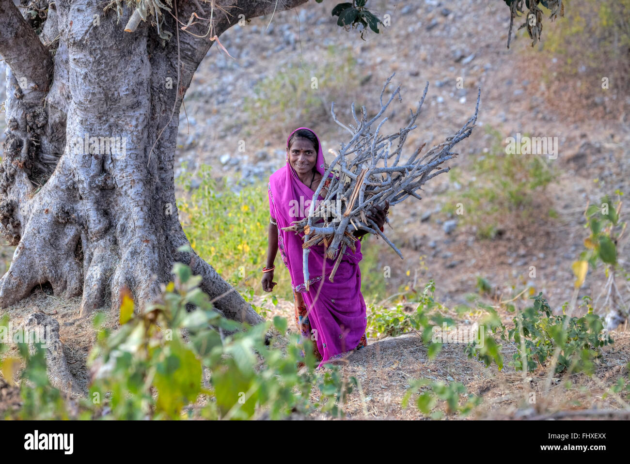 woman carrying firewood in rural Rajasthan, India - Stock Image