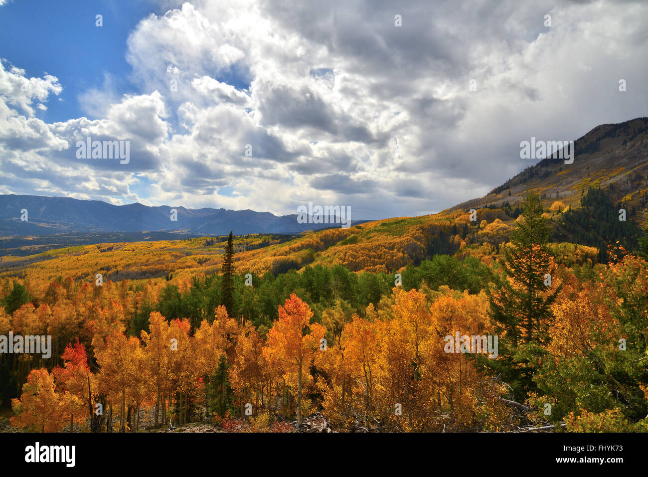 Fall colors along Forest Road 730 at Ohio Pass near Crested Butte, Colorado - Stock Image