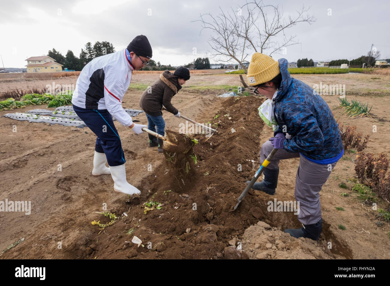 Volunteers from the aid agency Caritas, prepare a vegetable plot on land that has been affected by the 2011 earthquake, - Stock Image