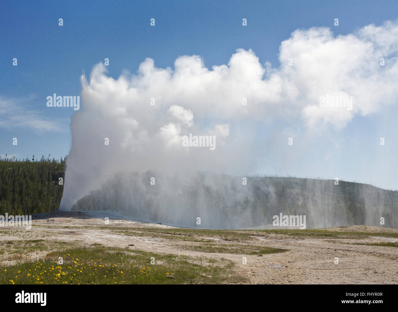 OLD FAITHFUL GEYSER erupts hourly sending as much as 8,400 gallons of boiling water 184 feet into the air - YELLOWSTONE - Stock Image