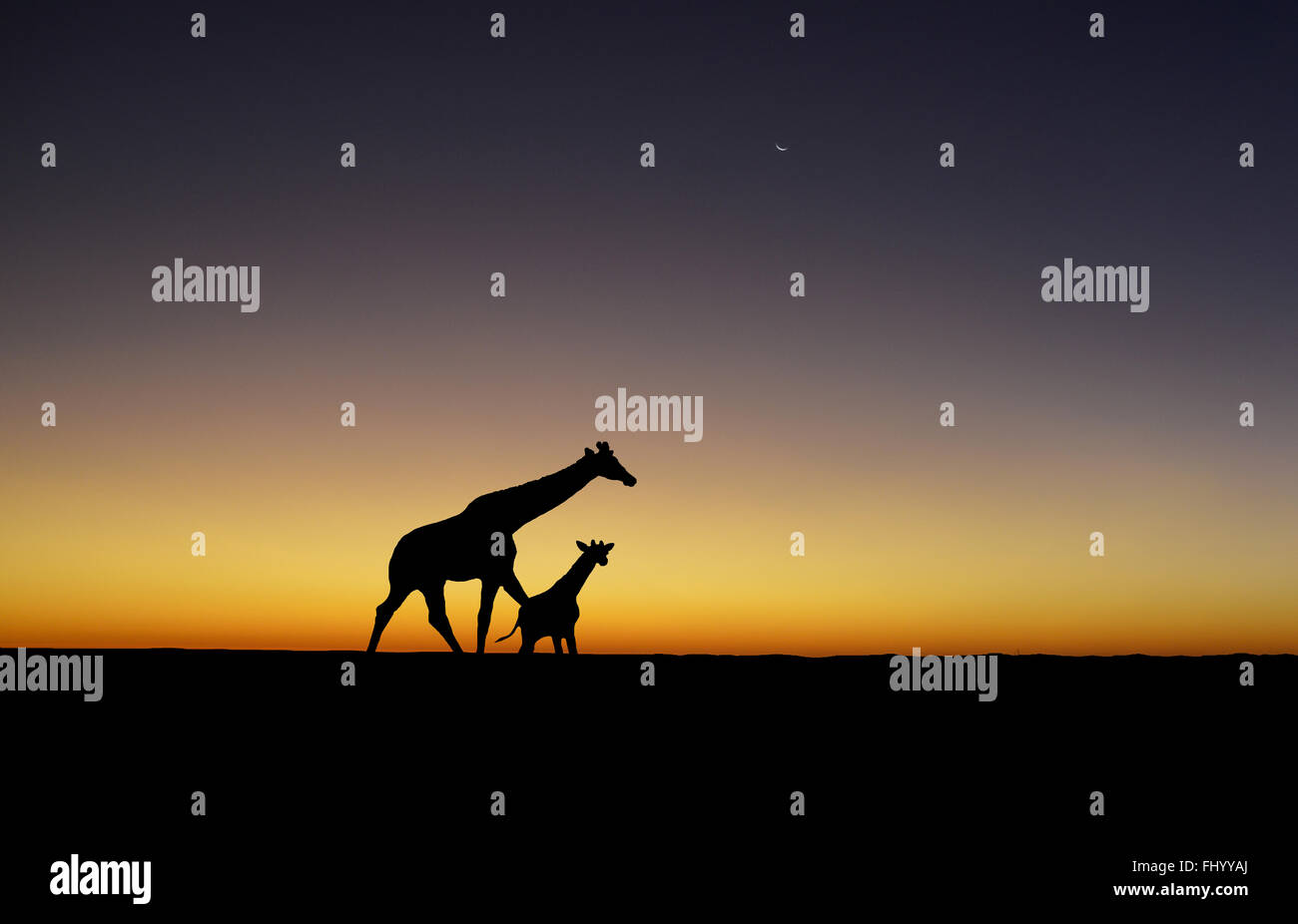 A Giraffe mother and baby are silhouetted at sunset - Stock Image