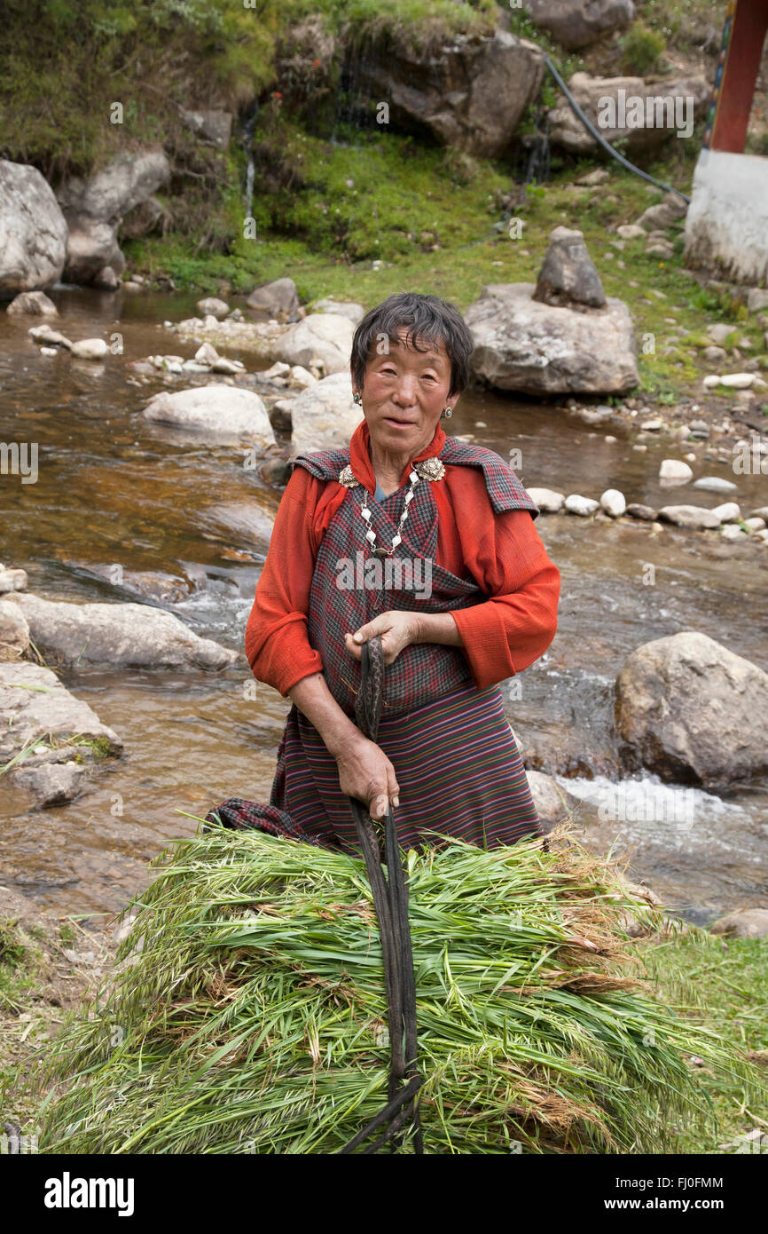 Woman in the Haa valley (Bhutan) gathering grass - Stock Image