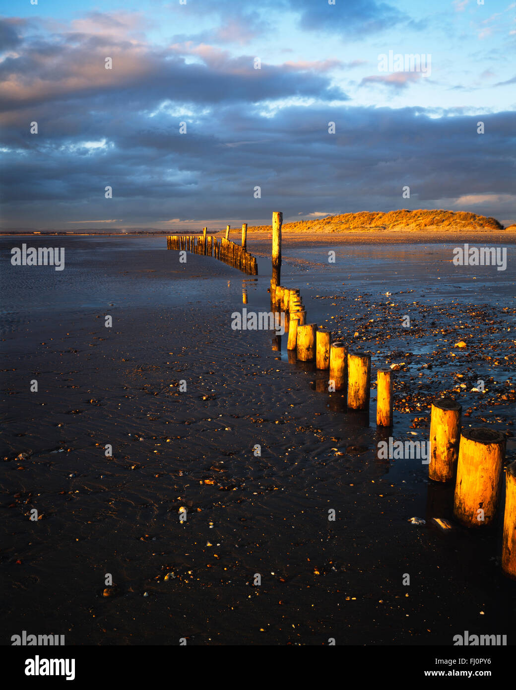 Wooden posts at low tide on West Wittering beach on a winter afternoon - Stock Image
