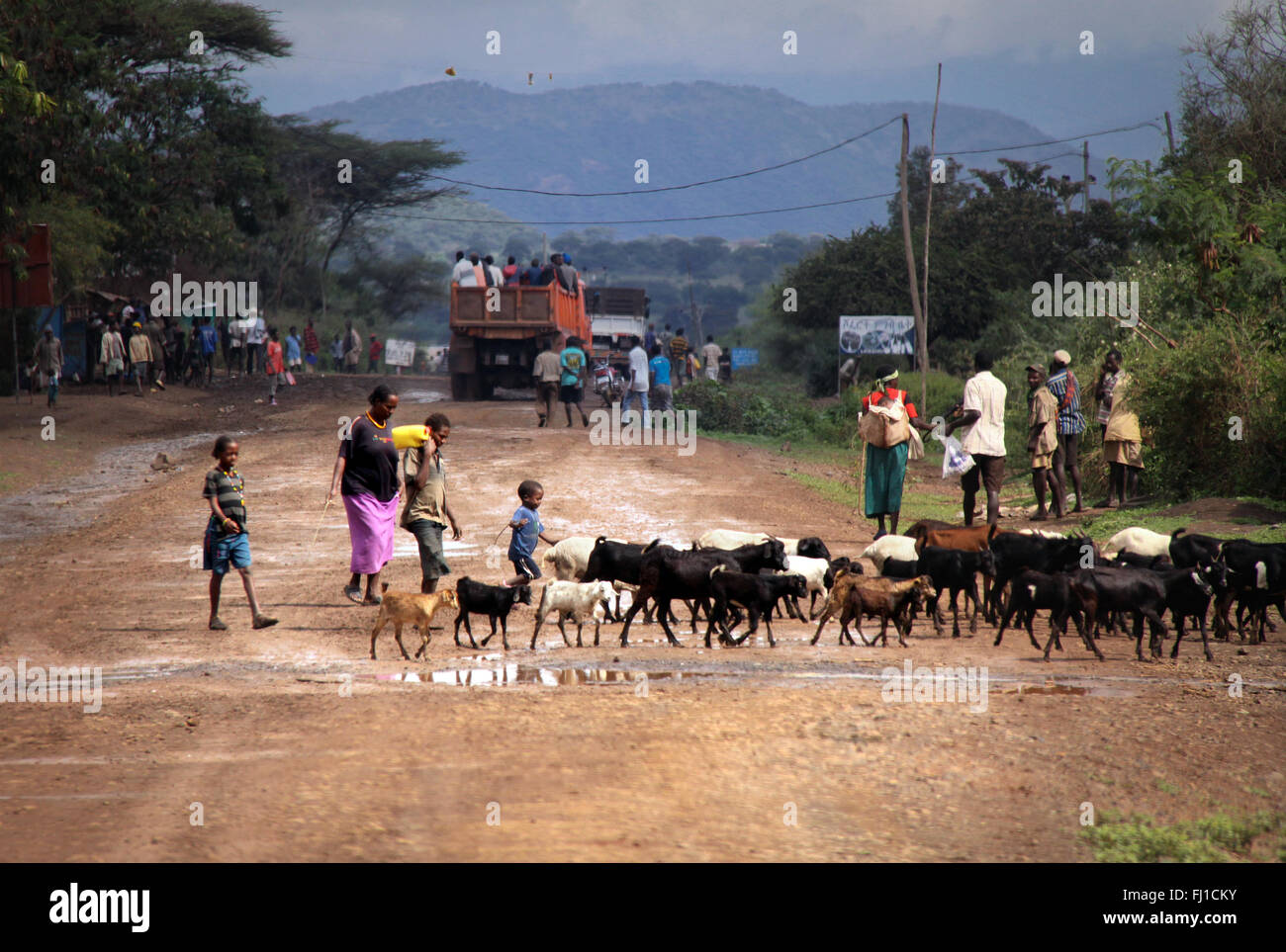 Landscape near Turmi village in Ethiopia - people crossing road with cattle - Stock Image