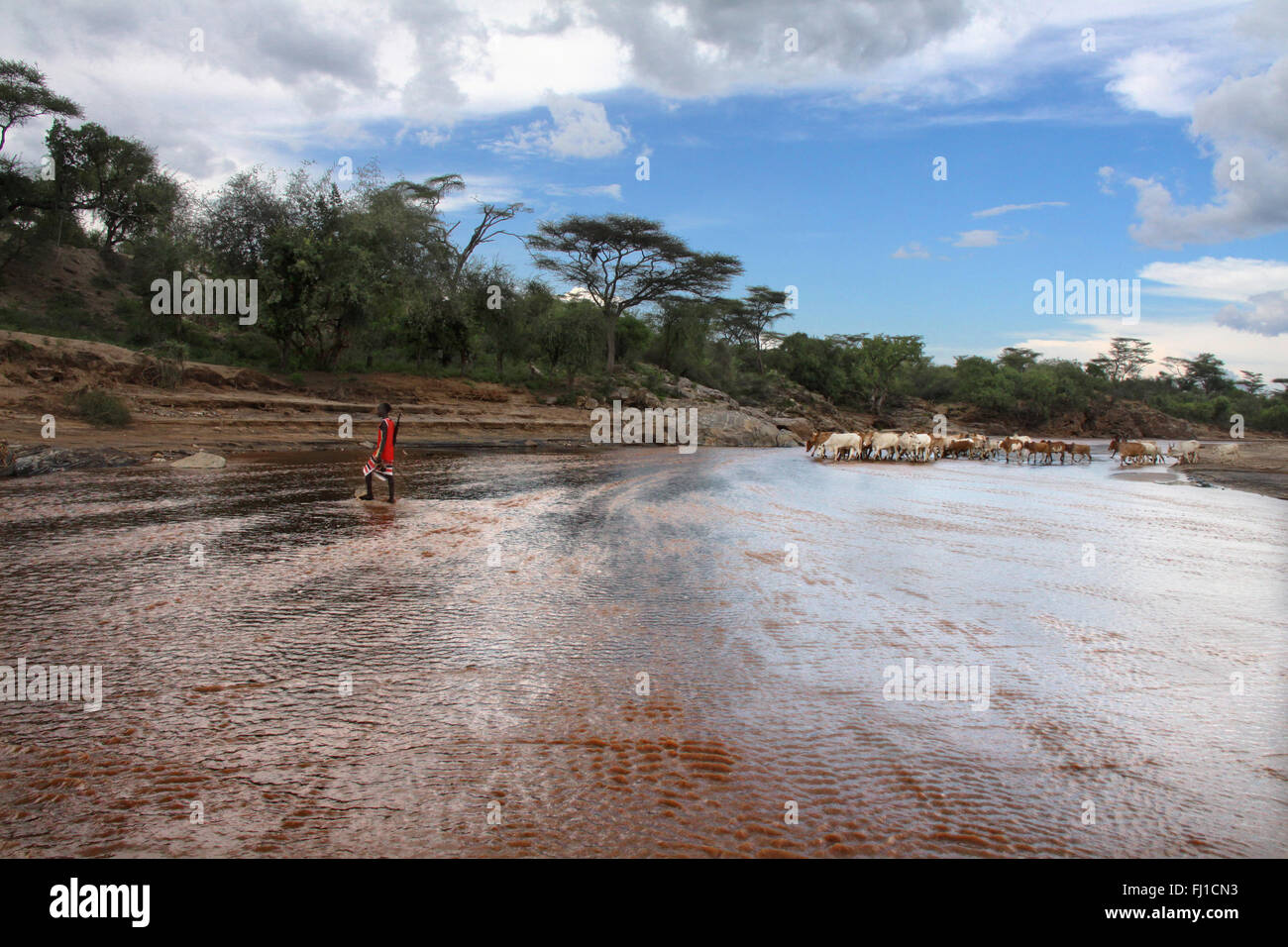 Landscape near Turmi, bush forest area, with hamer man going back home with cattle , Ethiopia - Stock Image