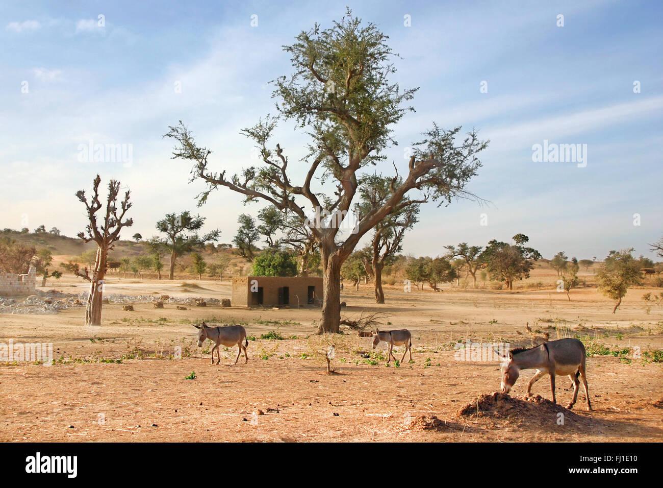 Landscape Of Dogon Country Mali Stock Photo Alamy