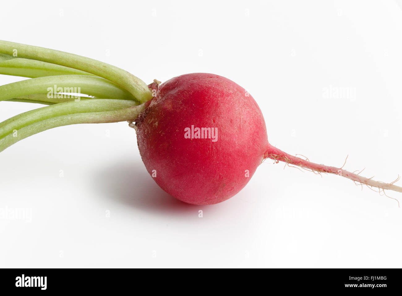 Single fresh red radish, Raphanus sativus on white background Stock Photo