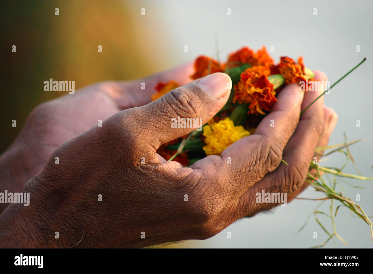 Puja of flowers in Varanasi, India - Architecture and daily street life - Stock Image