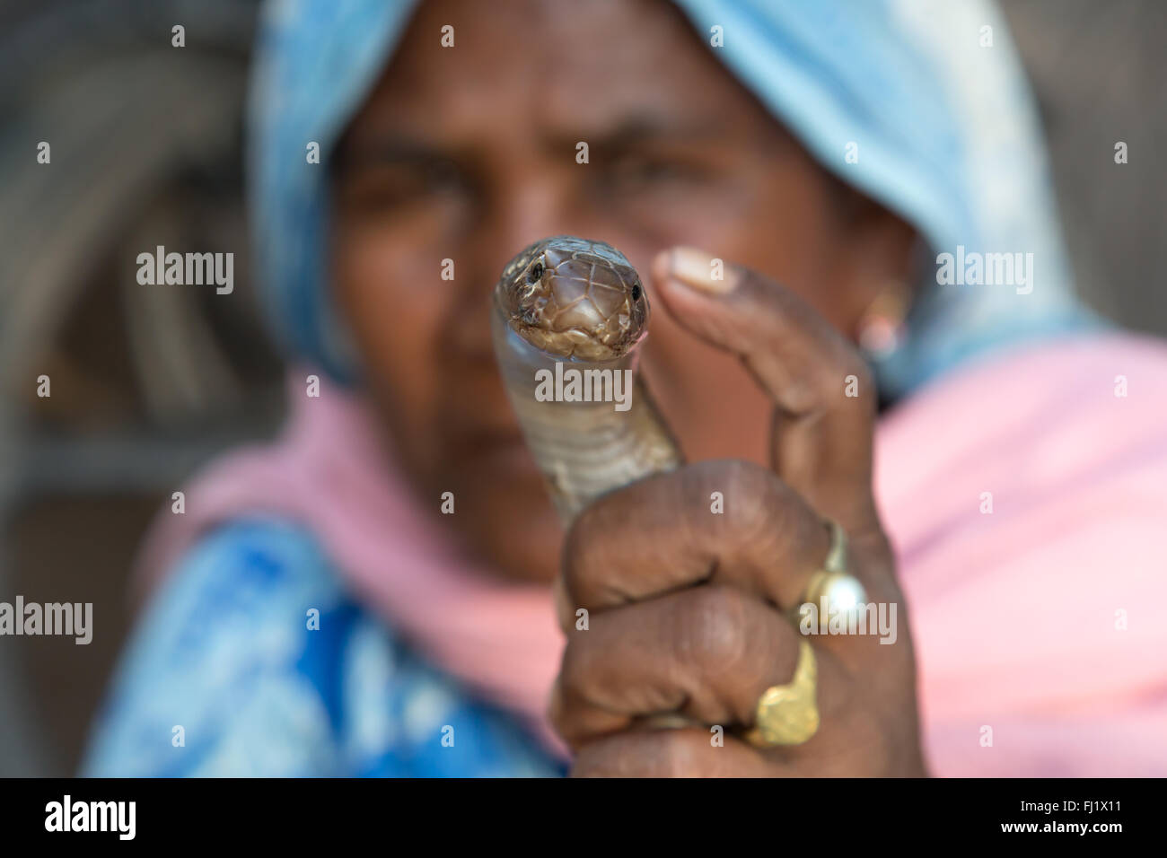 Snake shown by Indian woman in Varanasi , India - Stock Image