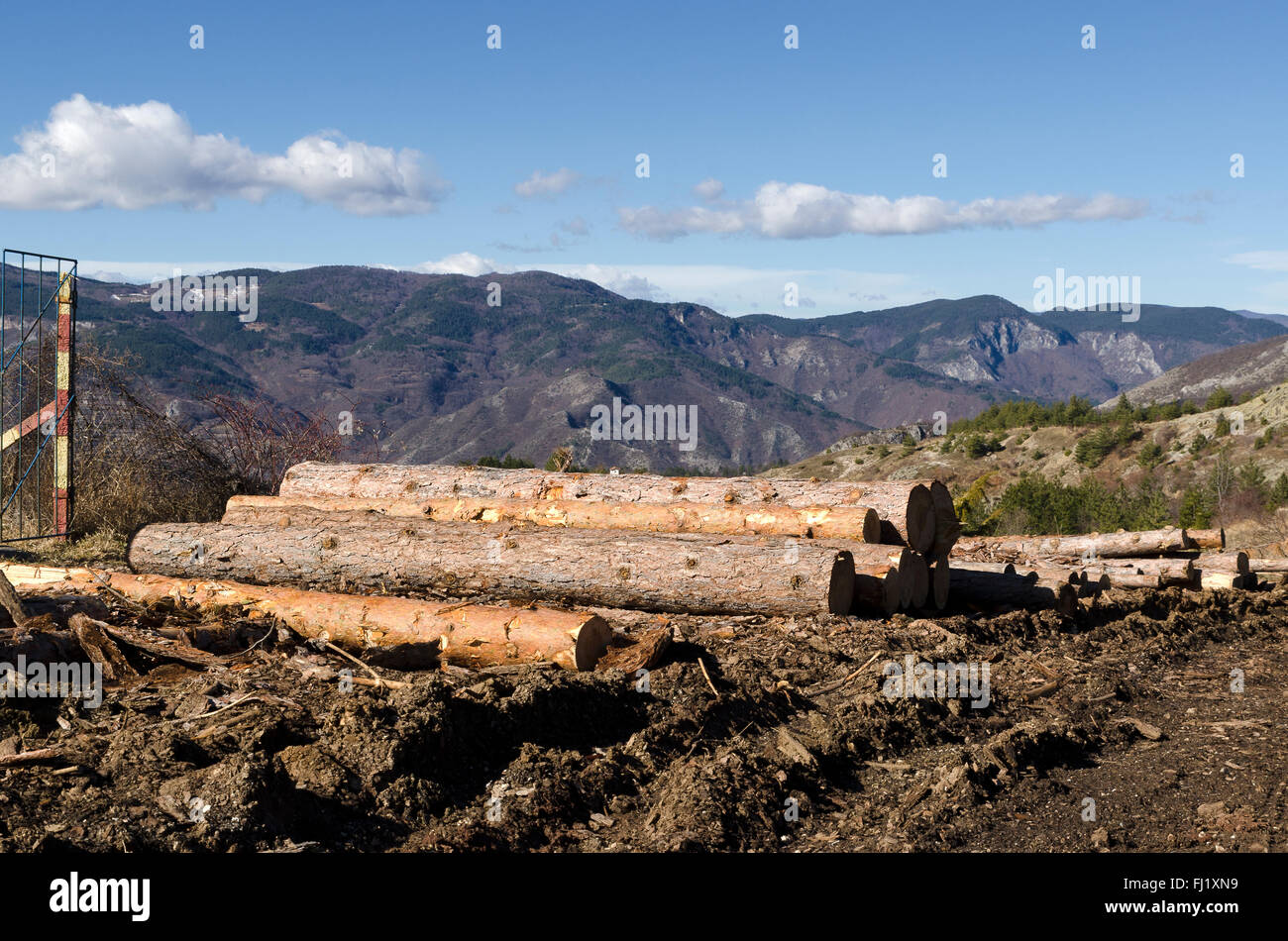 Coniferous stack on a mountain hill - Stock Image