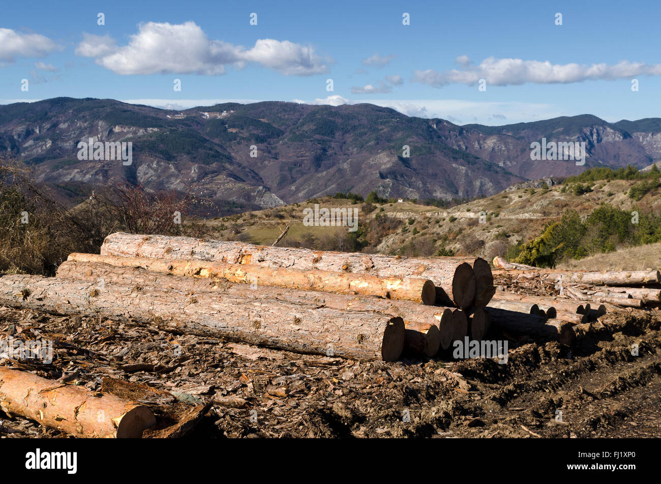Stack of timber in a mud on a hill - Stock Image