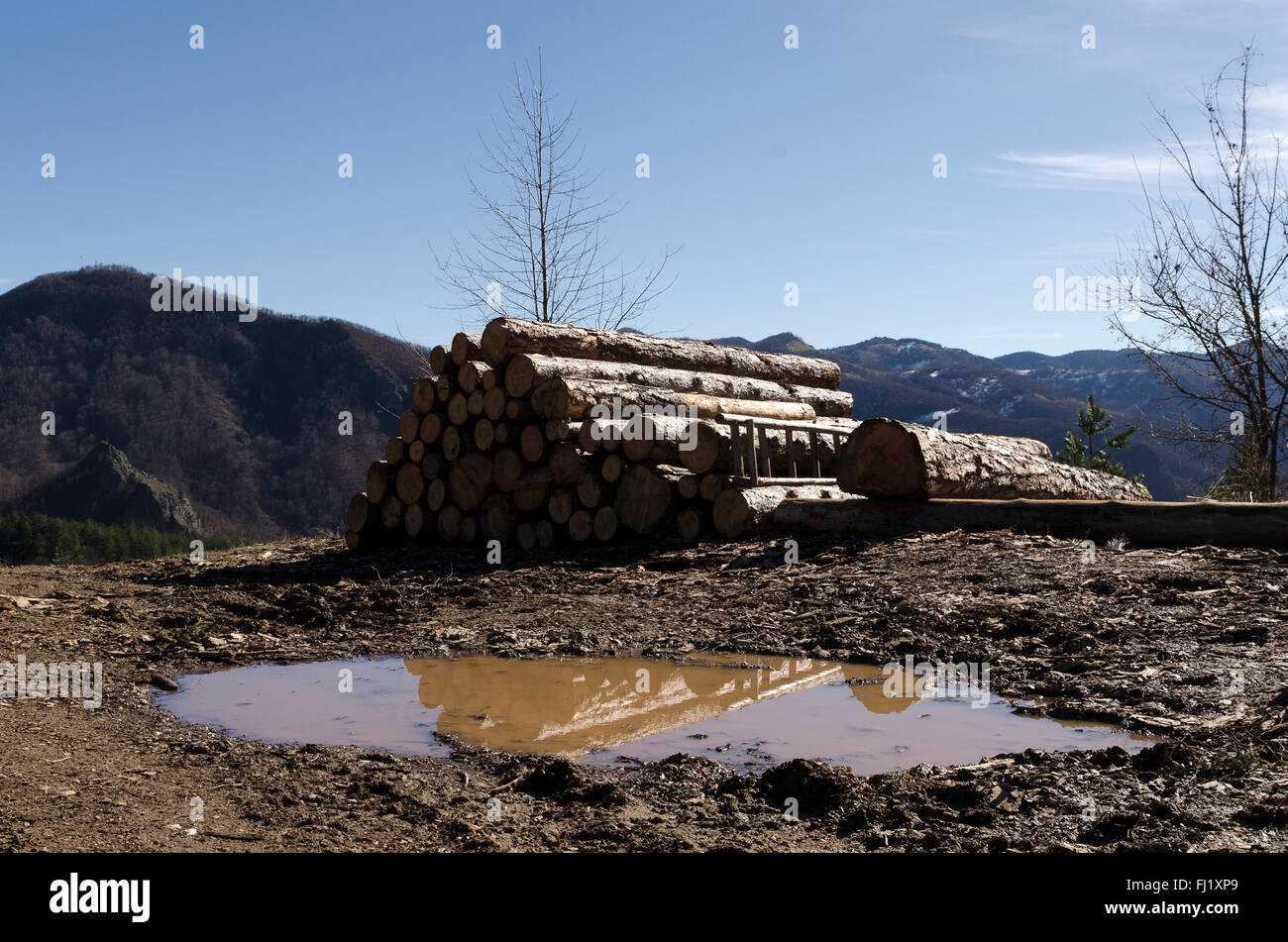 Timber in a hill in the Rhodope Mountain - Stock Image