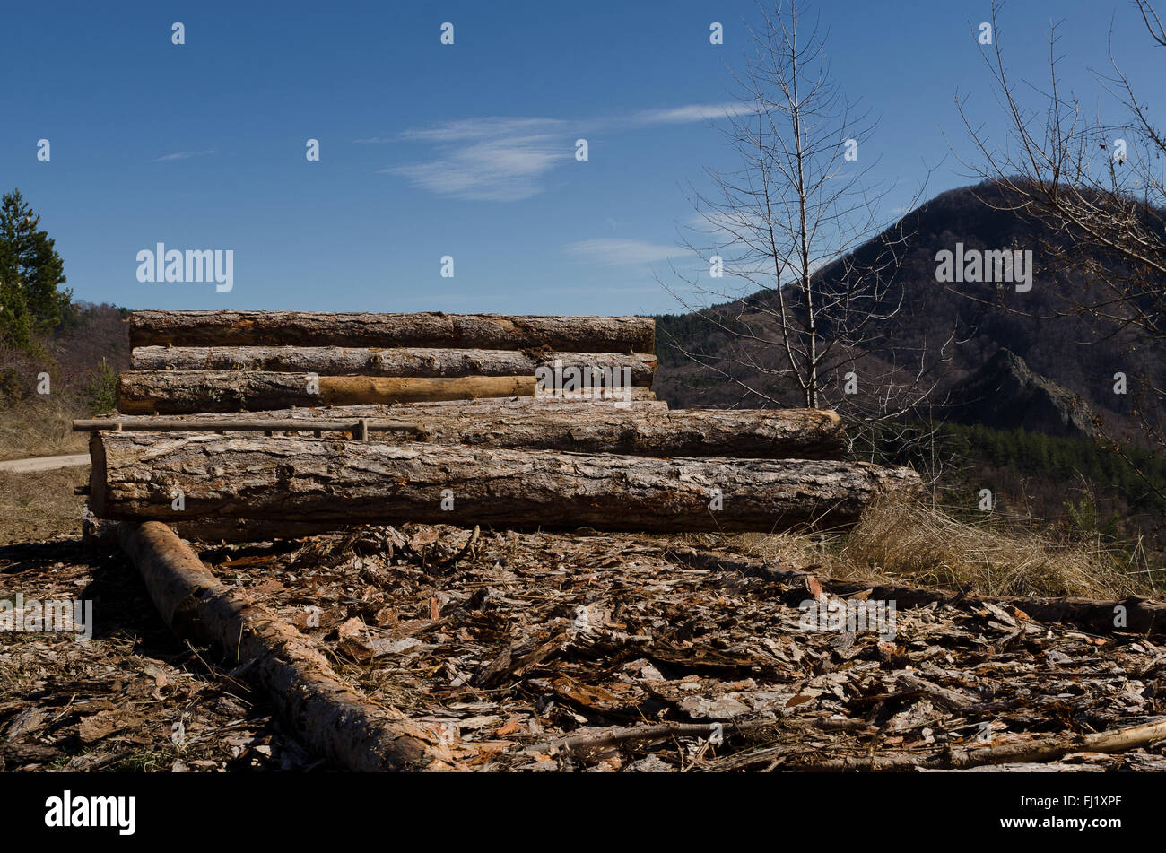 Timber of coniferous in a hill in the Rhodope Mountain - Stock Image