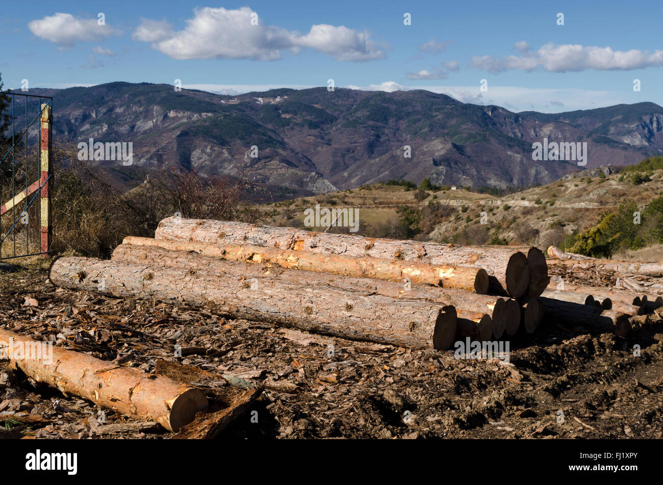 Timber of coniferous in a mud on a hill - Stock Image