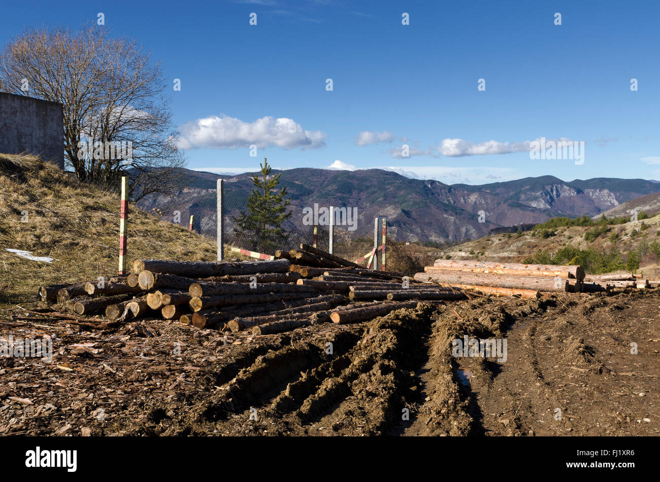 Timber on a hill in a Rhodope Mountain - Stock Image