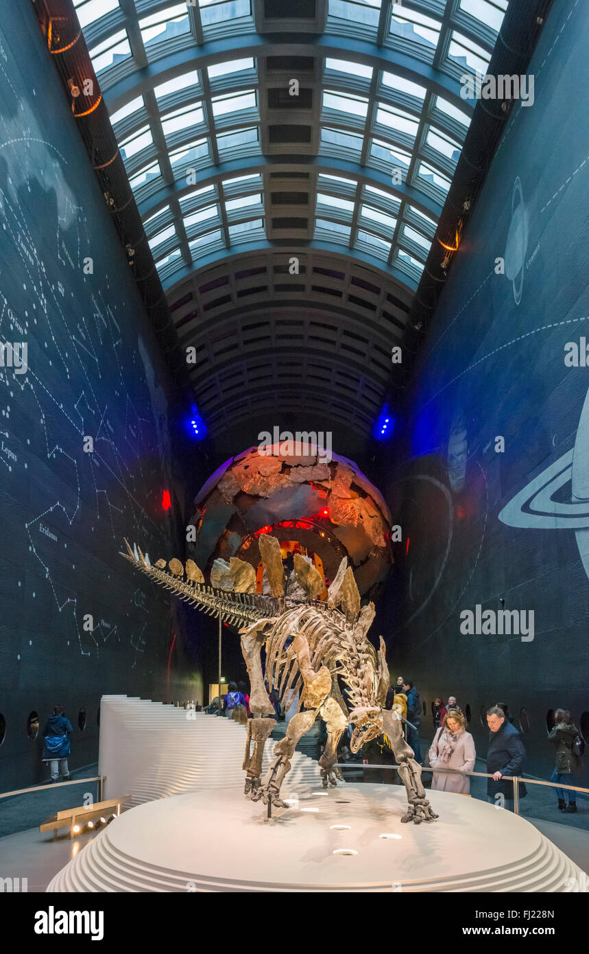 Stegosaurus fossil skeleton in the Earth Hall at  Exhibition Road entrance, Natural History Museum, South Kensington, - Stock Image