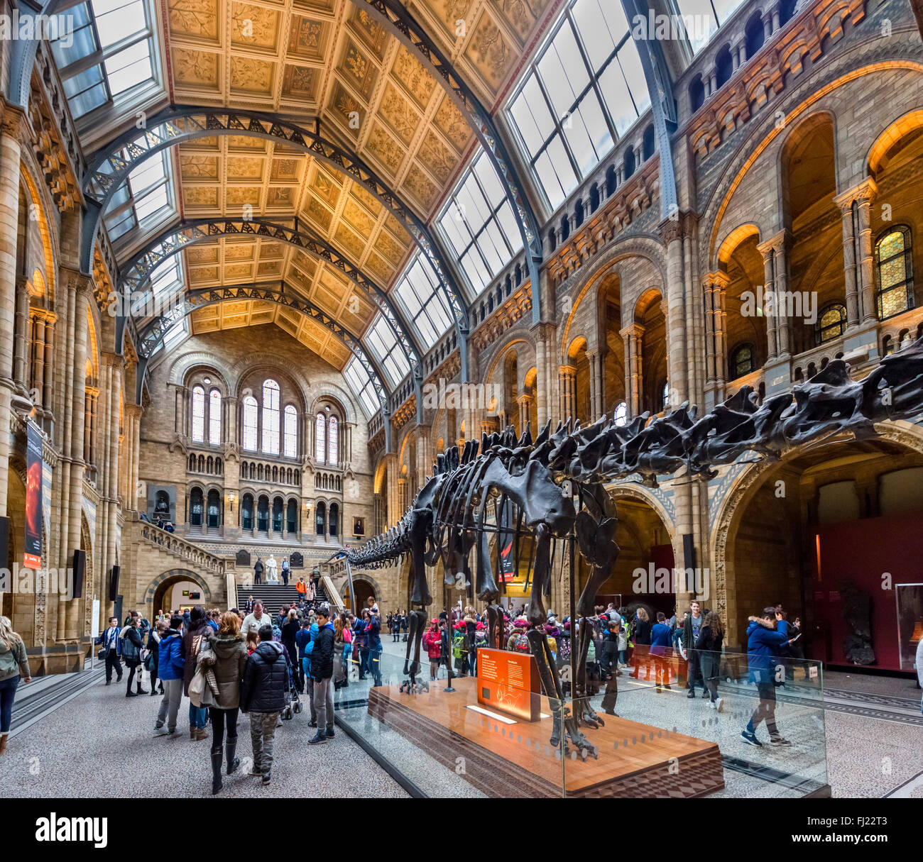 'Dippy' the Diplodocus, a fossil skeleton cast in Hintze Hall, Natural History Museum, South Kensington, - Stock Image