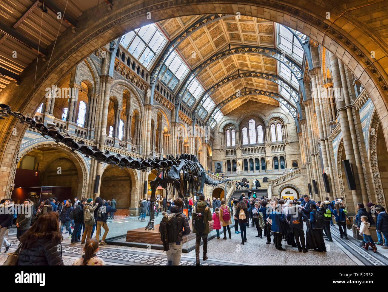 Hintze Hall with 'Dippy' the Diplodocus, a fossil skeleton cast, Natural History Museum, South Kensington, - Stock Image