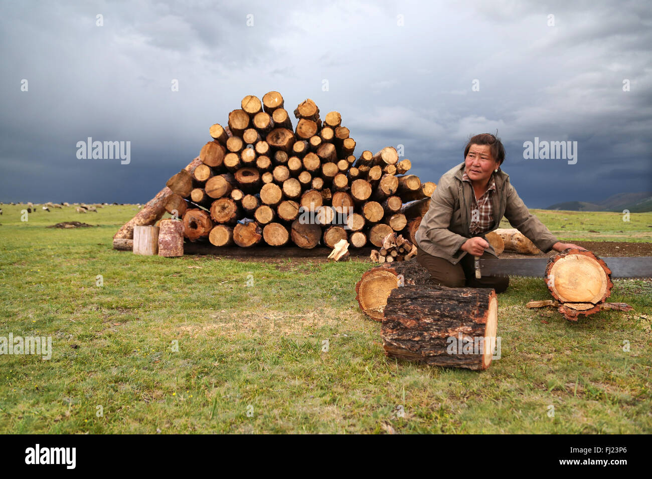 Mongolian woman cutting wood at camp before the night - Stock Image