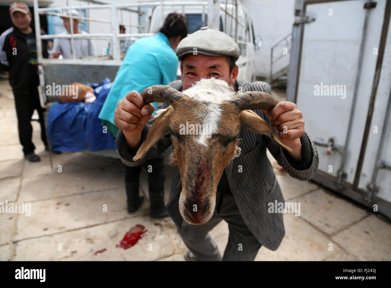 Man showing dead goat face beheaded in the moron market, Mongolia - Stock Image