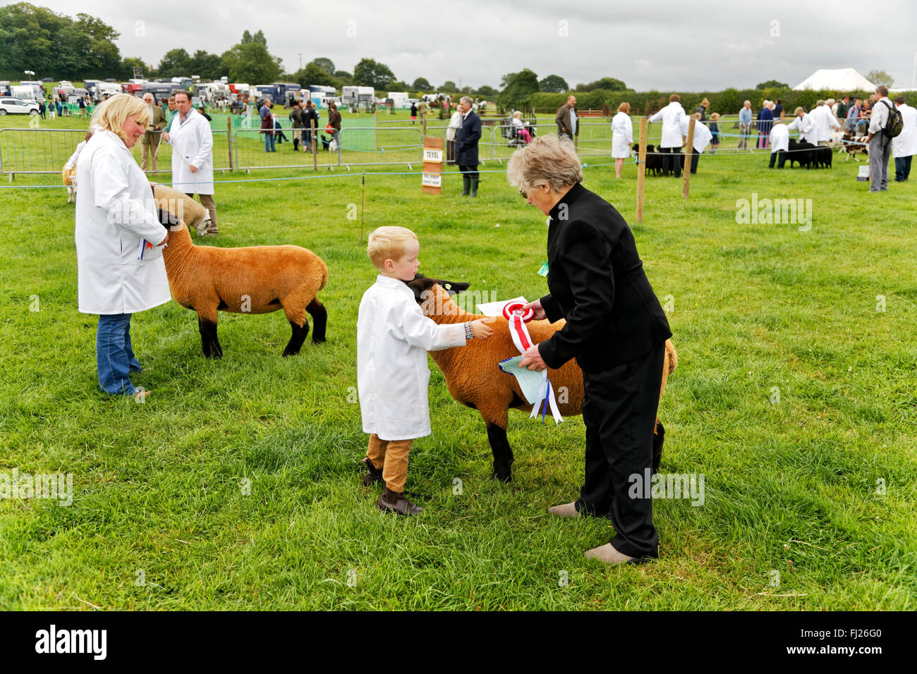 A young boy receives a winners rosette after his sheep won 1st place at the 2015 Gillingham & Shaftesbury Agricultural - Stock Image