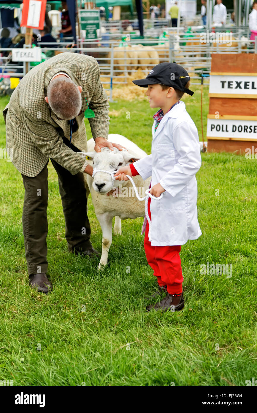 Gillingham Boy Arrested After Teen Was Stabbed To Death: Poll Dorset Sheep Stock Photos & Poll Dorset Sheep Stock