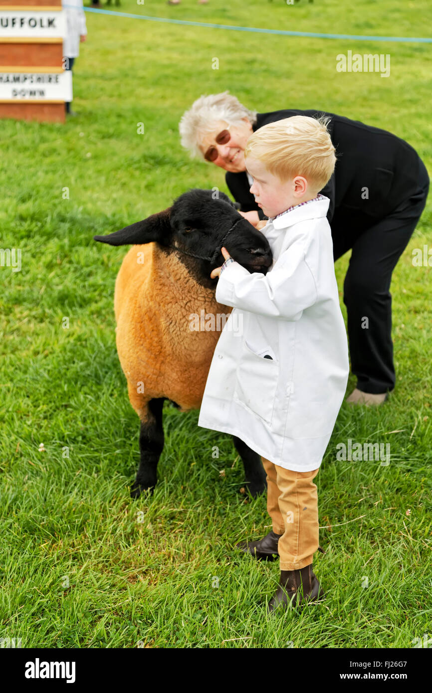 A young boy has his sheep judged at the 2015 Gillingham & Shaftesbury Agricultural Show, Dorset, United Kingdom. - Stock Image