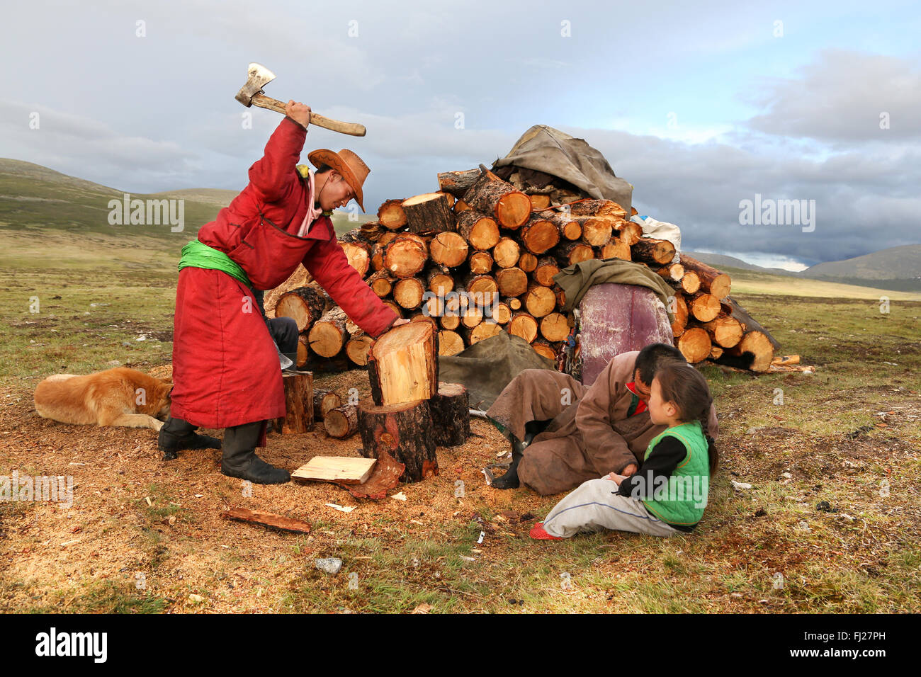 Tsaatan man cutting wood with ax for fire, , Tsaatan Dukha people , nomadic reindeer herders , Mongolia - Stock Image